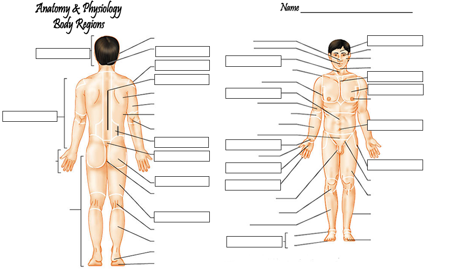 Unit 1: Introduction to Anatomy - Mrs. kubajak\'s website
